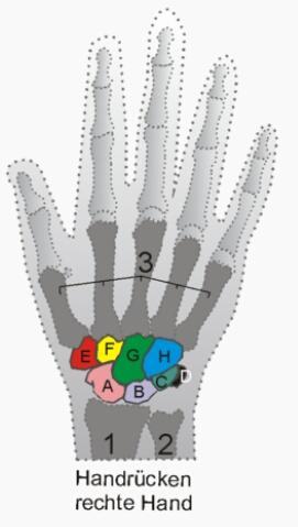 Schmerzen:G,B,H,C,D - (Schmerzen, Handgelenk)
