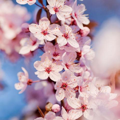 Aussehen blumen wie rosen die ähnlich Die Blume