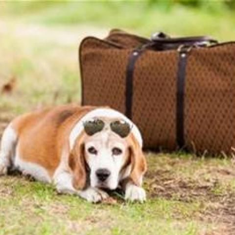 Auf Reisen mit Hund  - (Hund, Reise, Flug)
