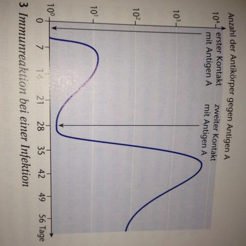 Das ist die Kurve auf dem Foto, die ich nicht versteh:( - (Biologie, kurven, Antigone)