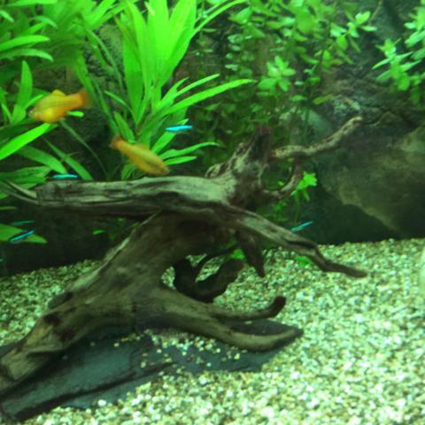 algen im aquarium was tun