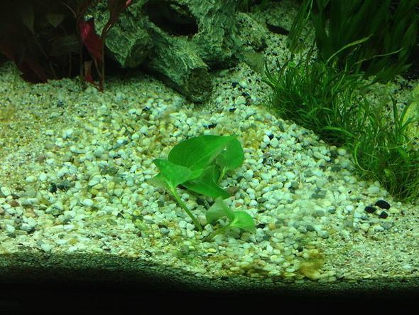 algen im neuen aquarium aquaristik einfahrphase. Black Bedroom Furniture Sets. Home Design Ideas