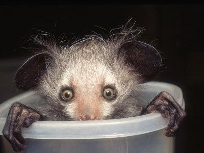 ...ich morgens im Bad mit Kater... - (Medizin, Biologie, Alkohol)