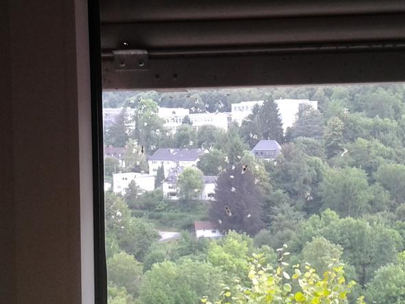 Kleine beflügelte Ameisen am Fenster - (Tiere, Haus, Garten)