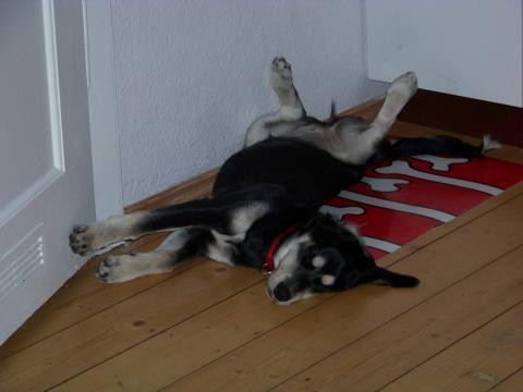 - (Hund, Welpen)
