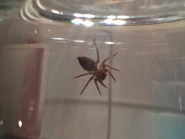 Unbekannte Spinne - (Insekten, Spinnen)
