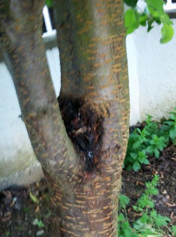 2 bild - (Garten, Baum, Heilung)