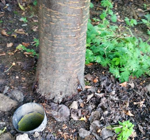 3 bild - (Garten, Baum, Heilung)