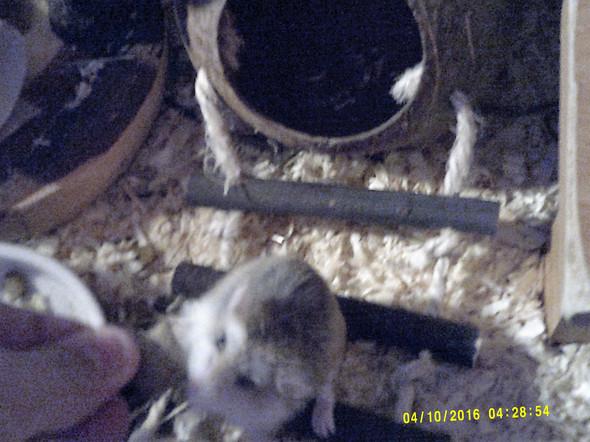 Das ist meine Hamsterdame :) Halt Leckerliegeil ! - (Angst, Biss, hamsterbiss)