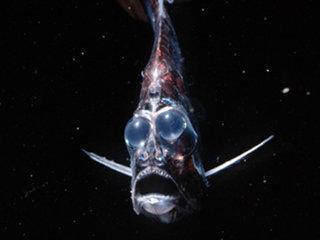 Schwarze Tiefe/ Gruseliger Fisch - (Angst, Phobie)
