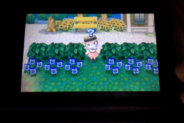 Animal Crossing Busch - (Nintendo, Nintendo DS, Animal-Crossing)