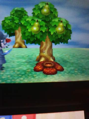 Animal Crossing New leaf Pilz entfernen?