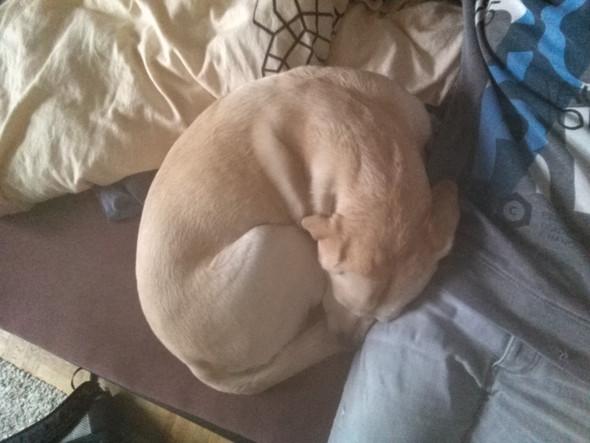 Mein Hund - (Hund, anzeigen, Angriff)