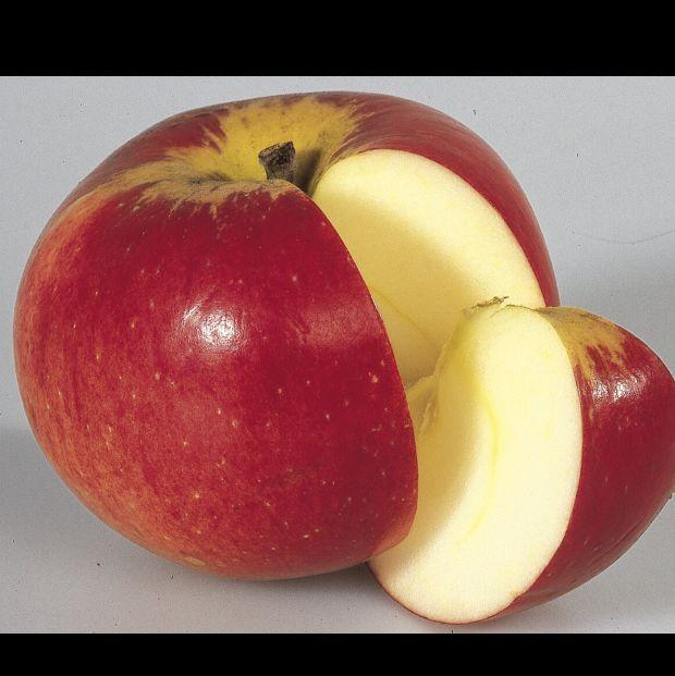 Apfel zeichnen? (Schule, Gesundheit, Kunst)