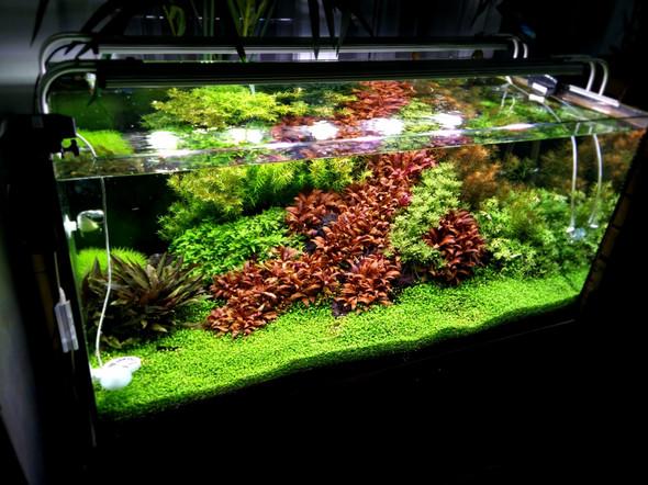 aquarien als luftverbesserer tiere wasser pflanzen. Black Bedroom Furniture Sets. Home Design Ideas
