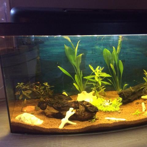 Links  - (Kinder, Fische, Aquarium)