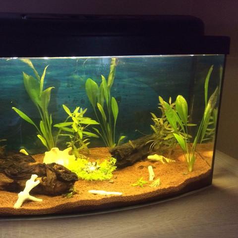 Rechts - (Kinder, Fische, Aquarium)