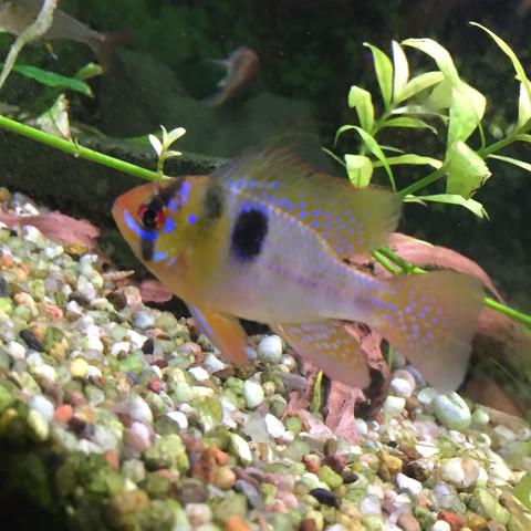 Fisch - (Fische, Aquaristik, Geschlecht)