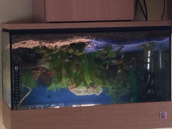 Diese pflanzenbesetzung - (Aquarium, Wasserwerte, luftpumpe)