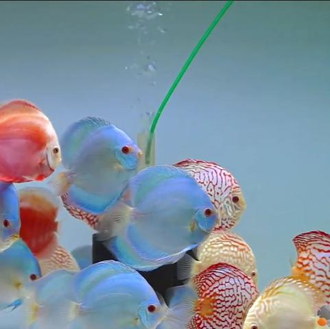 Rückwand  - (Aquarium, rückwand)