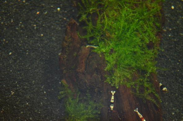 von oben - (Aquarium, Würmer, Wurzel)