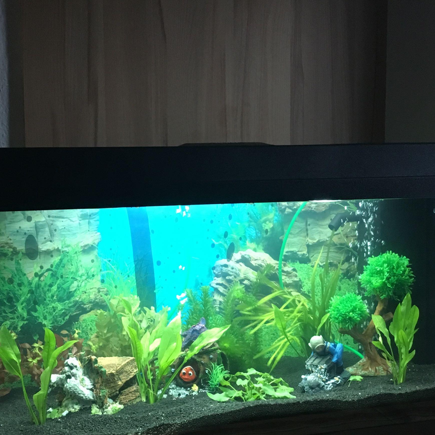 Aquarium 110l welche fische passen gut rein die sch ne for Welche fische fur miniteich