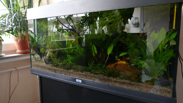 Standort - (Aquarium, Beleuchtung)