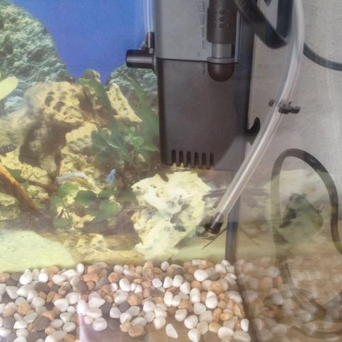aquarium aufbauen hilfe wasser fische filter. Black Bedroom Furniture Sets. Home Design Ideas