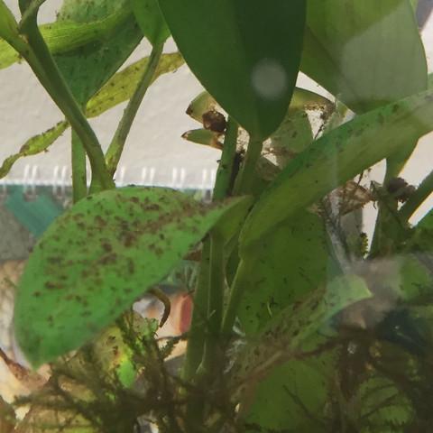 Aquarium  - (Pflanzen, Fische, Aquarium)