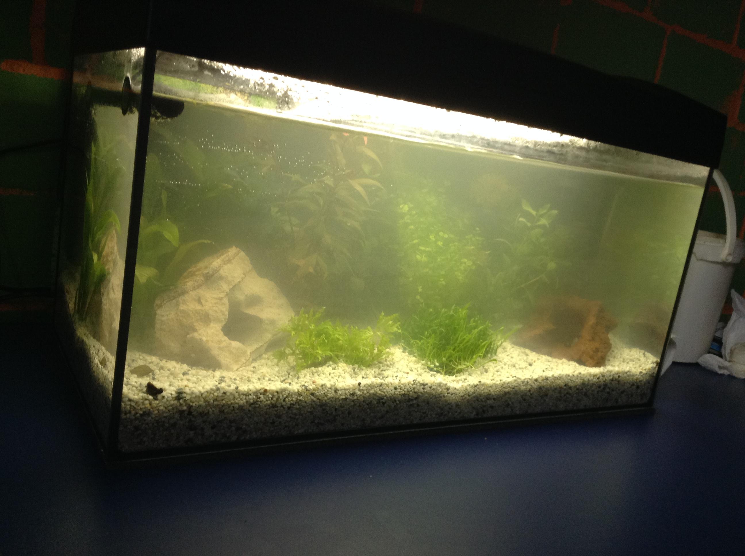 aquarium besetzung bei 54l was f r fische wissen. Black Bedroom Furniture Sets. Home Design Ideas