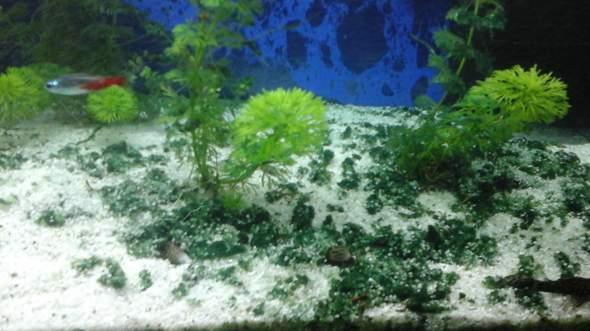 Aquarium boden grün?