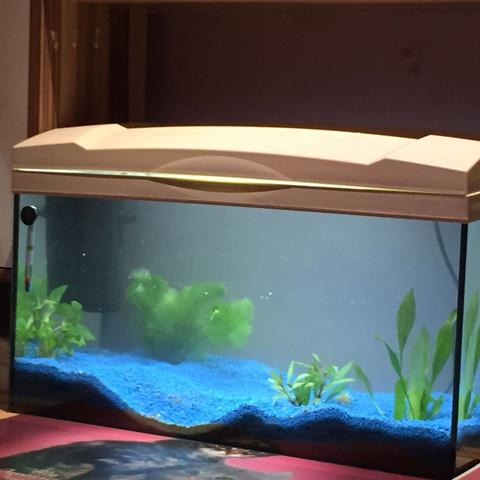 Aquarium eingerichtet  - (Wasser, Aquarium)