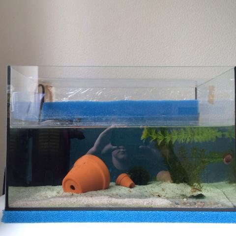 So sieht es aus  - (Fische, Aquarium, Aquaristik)