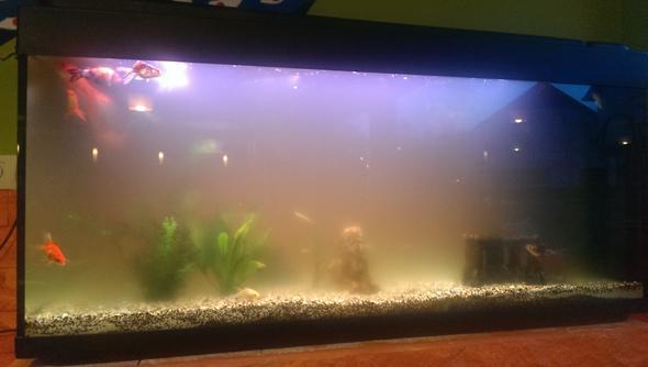 Aquarium im restaurant tr b wasserwerte ok goldfische for Aquarium goldfische