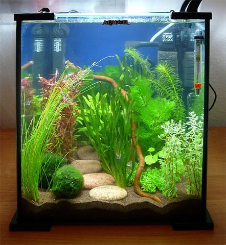 aquarium neu einrichten brauche hilfe aquaristik. Black Bedroom Furniture Sets. Home Design Ideas