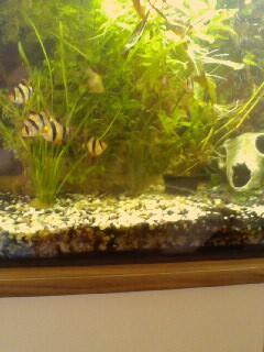 aquarium neu gestalten wohin mit den fischen fische deko dekorieren. Black Bedroom Furniture Sets. Home Design Ideas