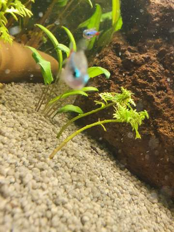 - (Wasser, Pflanzen, Fische)