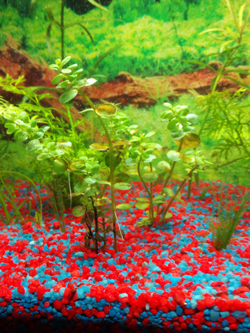 - (Pflanzen, Aquarium, braun)