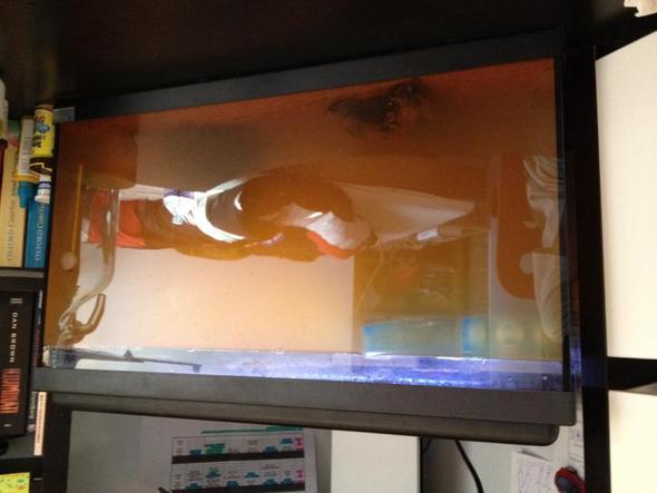 so sieht es jetzt aus - (Aquarium, Sand)