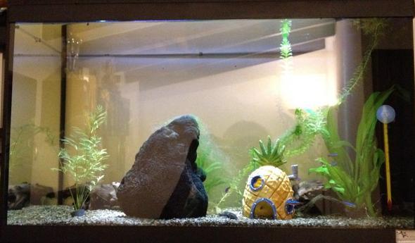 und so sah es vorher aus - (Aquarium, Sand)