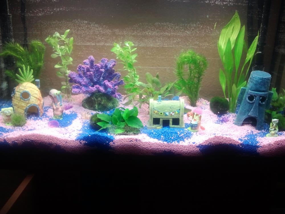 Aquarium So Gut Fische Aquaristik Dekoration
