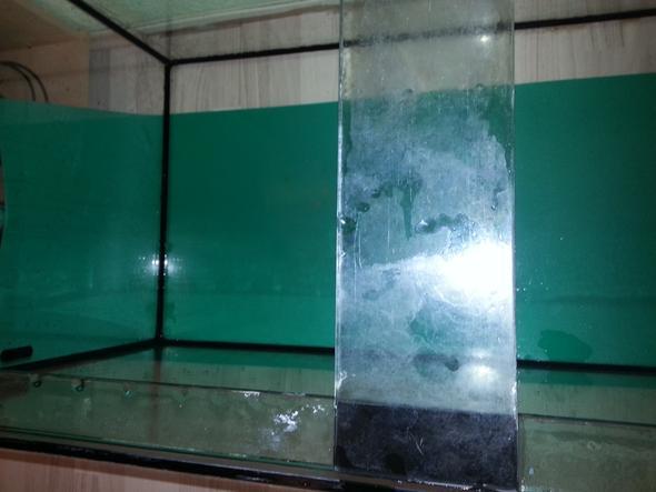 aquarium verkalkt wie sauber bekommen hamster kalk hamsterhaltung. Black Bedroom Furniture Sets. Home Design Ideas