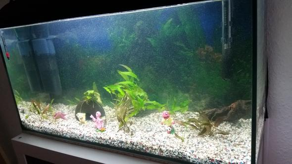 So sieht es aus :-( - (Aquarium, Pumpe)