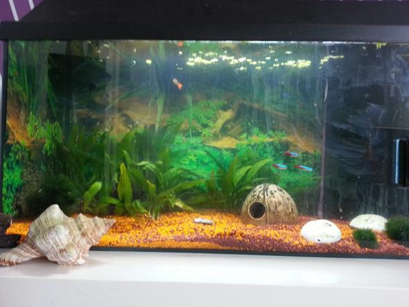 mein Aquarium - (Tiere, Wasser, Fische)
