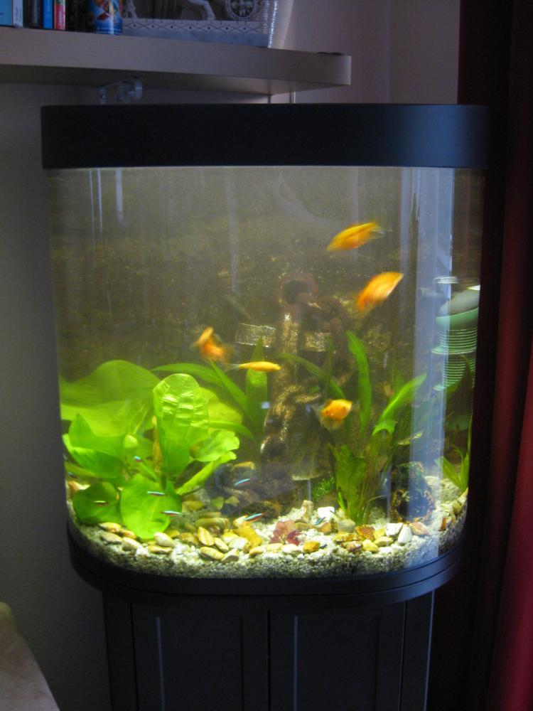 Aquarium weiß lackieren (Farbe, Fische, Möbel)