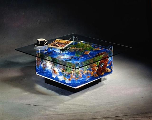 Aquarium w rfel als wohnzimmertisch und barsche for Aquarium wohnzimmertisch