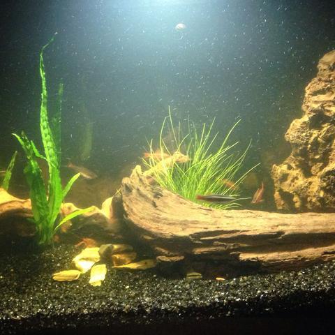 aquarium zu dunkel led aquaristik beleuchtung. Black Bedroom Furniture Sets. Home Design Ideas