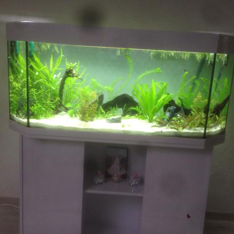 Mitte - (Fische, Aquarium, Skalare)