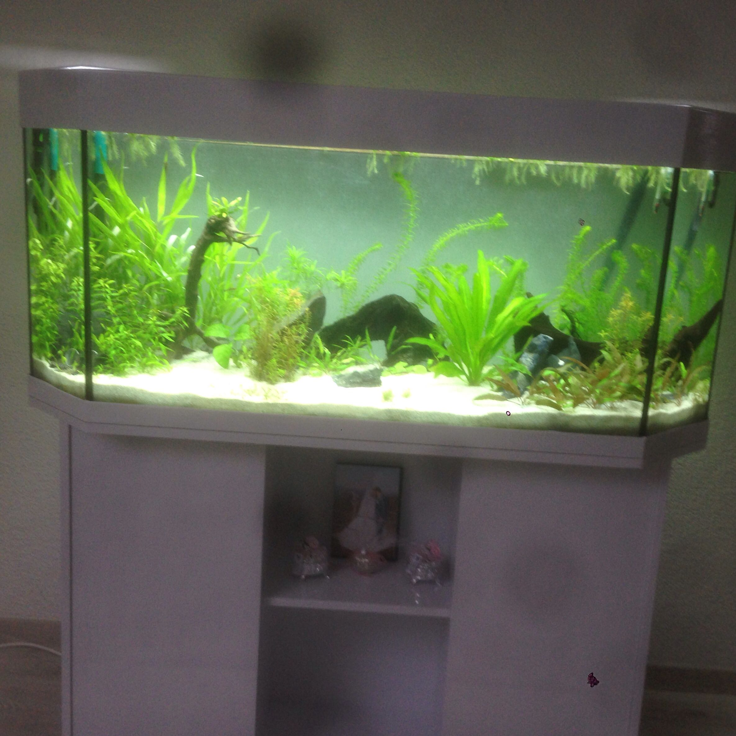 aquariumbesatz 250l fische aquarium skalare. Black Bedroom Furniture Sets. Home Design Ideas