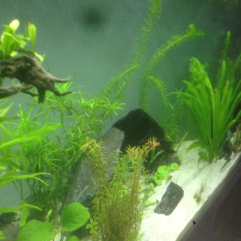 Mitte-Links - (Fische, Aquarium, Skalare)